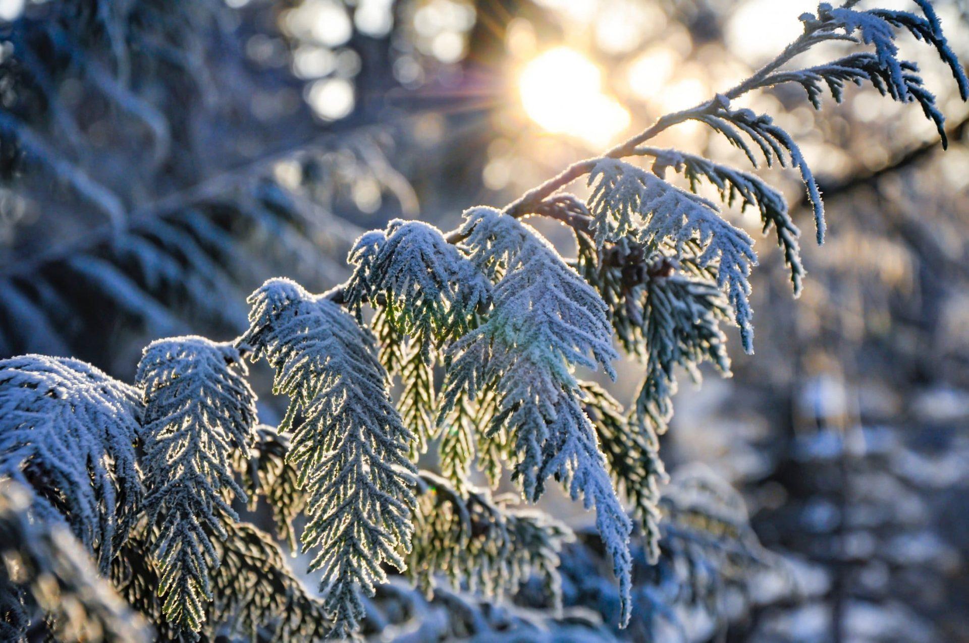 Winter Cover Photo