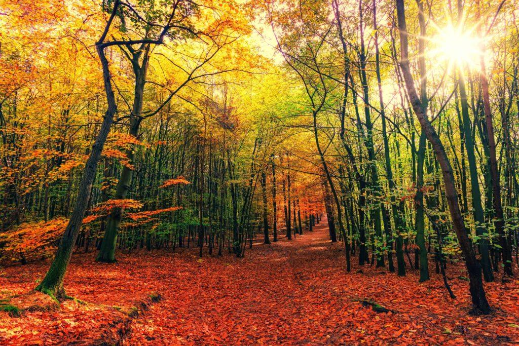 Autumn Forest2